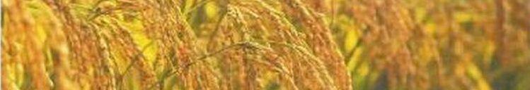 珪酸石灰肥料協会